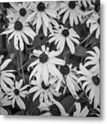 4400- Daisies Black And White Metal Print