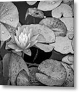 4434- Lily Pads Black And White Metal Print
