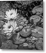 4445- Lily Pads Black And White Metal Print