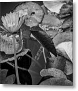 4466- Lily Pads Black And White Metal Print