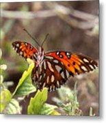 4529 - Butterfly Metal Print