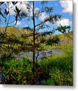 49- Florida Everglades Metal Print
