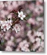 Tree Blossoms Metal Print