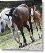 Wild Mustangs Metal Print