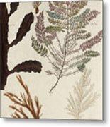 Aquatic Animals - Seafood - Algae - Seaplants - Coral Metal Print
