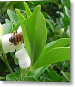 Australia - The Bees Metal Print