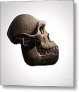 Australopithecus Skull Metal Print