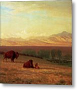 Buffalo On The Plains Metal Print