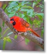 Cardinal Birds Hanging Out On A Tree Metal Print
