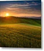 Cereal Fields Metal Print