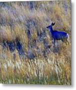 Deer Outdoors. Metal Print