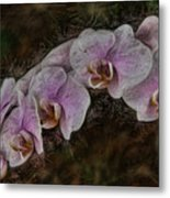 5 Dollar Orchid Metal Print