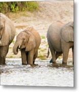 Elephants At The Bank Of Chobe River In Botswana Metal Print