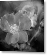 Knockout Roses Painted Bw Metal Print