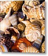 Mix Group Of Seashells Metal Print