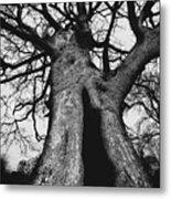 Old Tree Metal Print