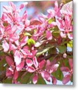 Pink Cherry Flowers Metal Print