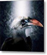 Red-billed Hornbill ,samburu, Kenya Metal Print