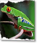 Red-eyed Leaf Frog Metal Print