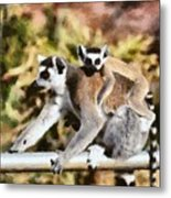Ring Tailed Lemur With Baby Metal Print