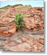 Sandstone Color In Valley Of Fire Metal Print
