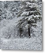 Snowstorm In The Pike National Forest Metal Print