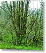 Spring In The Gorge Metal Print
