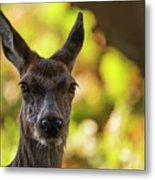 Stunning Hind Doe Red Deer Cervus Elaphus In Dappled Sunlight Fo Metal Print