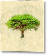 Umbrella Thorn Acacia Acacia Tortilis, Negev Israel Metal Print