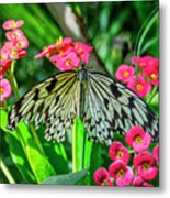 5050- Butterfly Metal Print