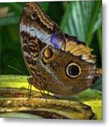5113- Butterfly Metal Print