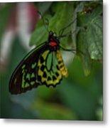5156- Butterfly Metal Print