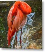 5182- Flamingo Metal Print