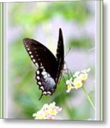5276-001- Butterfly - Swallowtail Metal Print