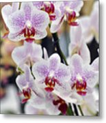 Orchids Metal Print