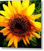 Love Flowers Metal Print