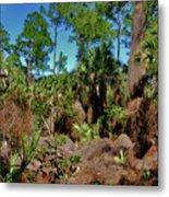 55- Everglades Afternoon Metal Print