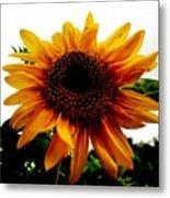 Love Flowers Metal Print