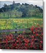 5b6301 Vineyards Of Color Metal Print