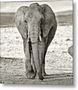 African Elephant In The Masai Mara Metal Print