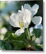 Apple Flowers Metal Print