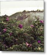 Rose Bush And Dunes Metal Print