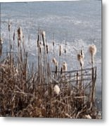 Bulrush Metal Print