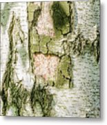 Detail Of Brich Bark Texture Metal Print