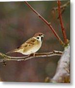 Eurasian Tree Sparrow Metal Print