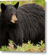 Maine Black Bear Metal Print