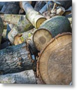 Morning Wood Metal Print