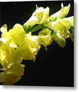 Nature Series Metal Print
