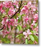 Pink Cherry Tree Metal Print