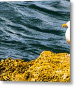 Sea Birds Metal Print